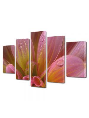 Set Tablouri Multicanvas 5 Piese Flori Petale si roua