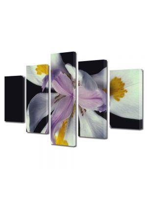 Set Tablouri Multicanvas 5 Piese Flori Floare cu trei petale