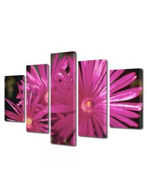 Set Tablouri Multicanvas 5 Piese Flori Petale subtiri