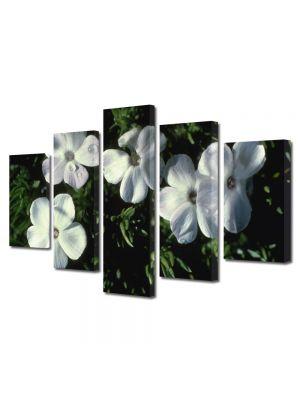 Set Tablouri Multicanvas 5 Piese Flori Cinci flori albe ca neaua