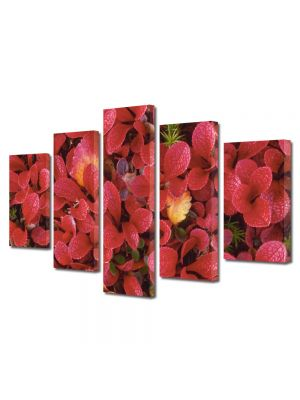 Set Tablouri Multicanvas 5 Piese Flori Petale rosii