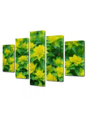 Set Tablouri Multicanvas 5 Piese Flori Floricele curioase