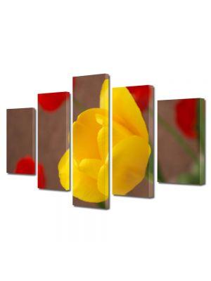 Set Tablouri Multicanvas 5 Piese Flori Lalele inflorite