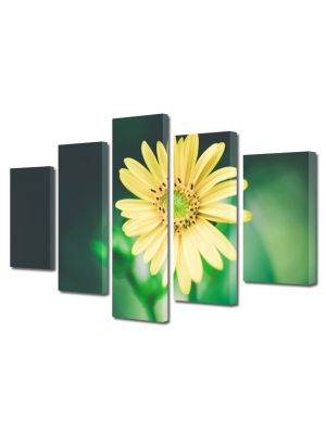 Set Tablouri Multicanvas 5 Piese Flori Floricica galbena