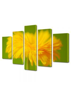 Set Tablouri Multicanvas 5 Piese Flori In prim plan