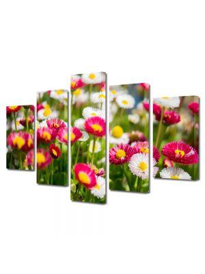 Set Tablouri Multicanvas 5 Piese Flori Margarete colorate