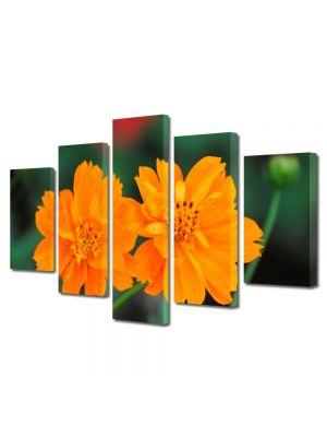 Set Tablouri Multicanvas 5 Piese Flori Flori cu tente portocalii