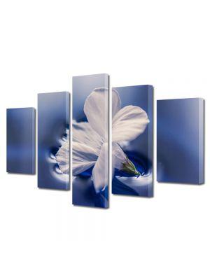 Set Tablouri Multicanvas 5 Piese Flori Floare plutind pe apa