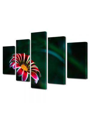 Set Tablouri Multicanvas 5 Piese Flori Floare cu petale rosii