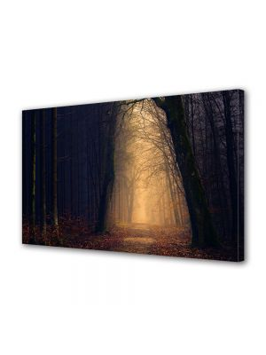 Tablou Canvas Halloween Culoar de lumina prin padure