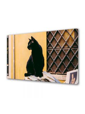 Tablou Canvas Halloween Pisica neagra pe strada