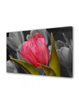 Tablou Canvas Sarbatori Paste Lalea roz pe fundal negru