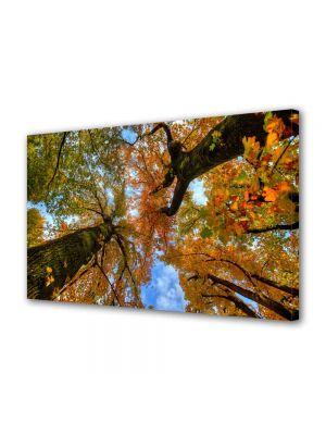 Tablou Canvas Luminos in intuneric VarioView LED Peisaj Doi copaci de jos