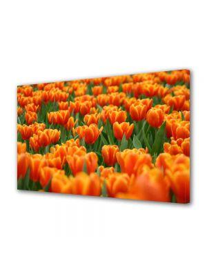 Tablou Canvas Peisaj Mare de lalele portocalii