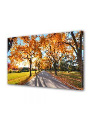Tablou Canvas Luminos in intuneric VarioView LED Peisaj Umbre de copaci