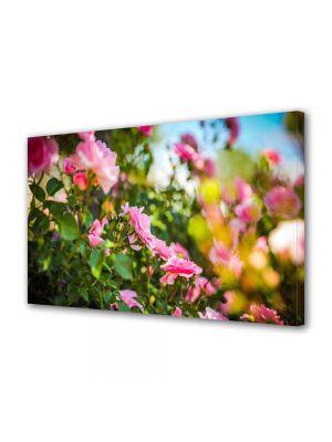 Tablou Canvas Luminos in intuneric VarioView LED Peisaj Trandafiri roz