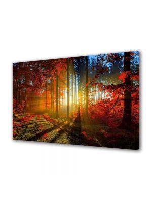 Tablou Canvas Peisaj Lumina printre copaci