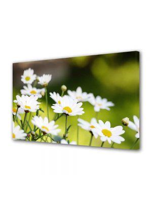Tablou Canvas Luminos in intuneric VarioView LED Peisaj Flori de musetel