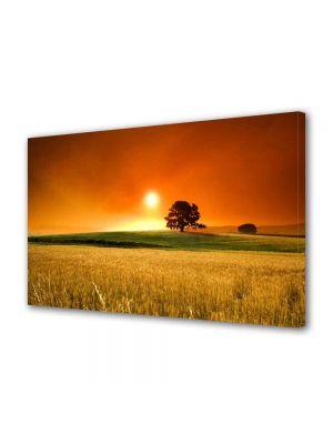 Tablou Canvas Peisaj In lanul de secara