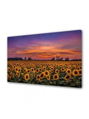 Tablou Canvas Luminos in intuneric VarioView LED Peisaj Floarea soarelui la apus