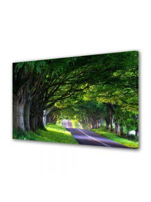 Tablou Canvas Peisaj Umbre de copaci batrani