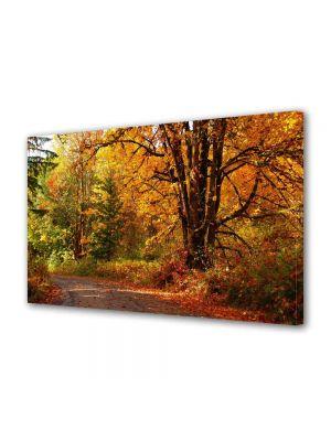 Tablou Canvas Peisaj Amestec de culori de toamna