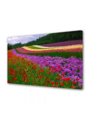 Tablou Canvas Peisaj Campii in Olanda