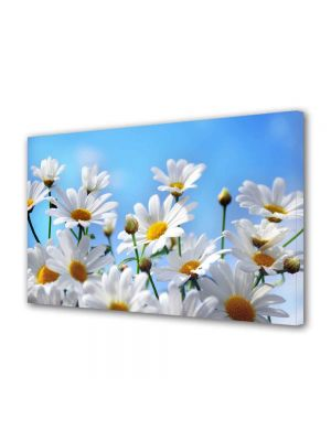 Tablou Canvas Peisaj Flori albe pe cer