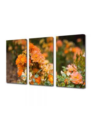 Set Tablouri Multicanvas 3 Piese Peisaj Trandafiri salbatici