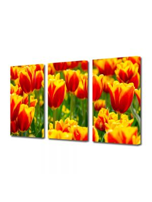 Set Tablouri Multicanvas 3 Piese Peisaj Lalele in 2 culori