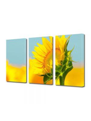 Set Tablouri Multicanvas 3 Piese Peisaj Pui de floarea soarelui