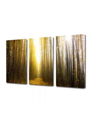 Set Tablouri Multicanvas 3 Piese Peisaj Lumina puternica