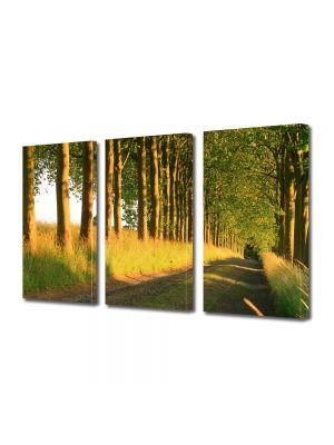 Set Tablouri Multicanvas 3 Piese Peisaj Copaci pe marginea drumului