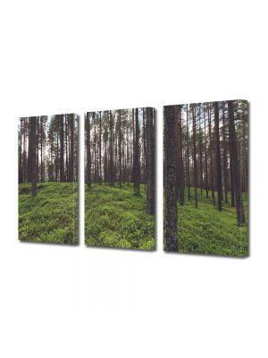 Set Tablouri Multicanvas 3 Piese Peisaj Padure rara