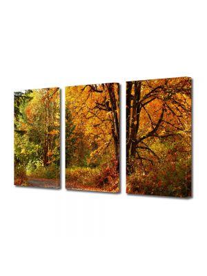 Set Tablouri Multicanvas 3 Piese Peisaj Amestec de culori de toamna
