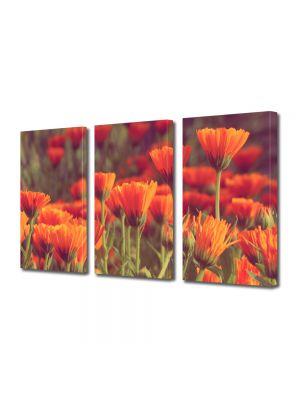 Set Tablouri Multicanvas 3 Piese Peisaj Flori rosii