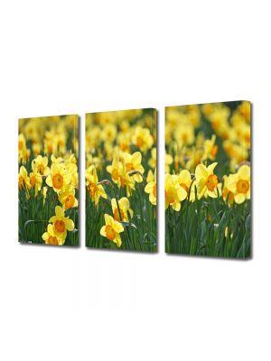 Set Tablouri Multicanvas 3 Piese Peisaj Floricele galbene