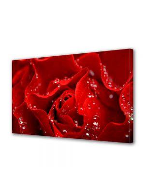 Tablou Canvas Valentine's Day Ziua indragostitilor Trandafir