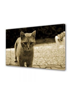 Tablou Canvas Luminos in intuneric VarioView LED Vintage Aspect Retro Pisica in tonuri retro