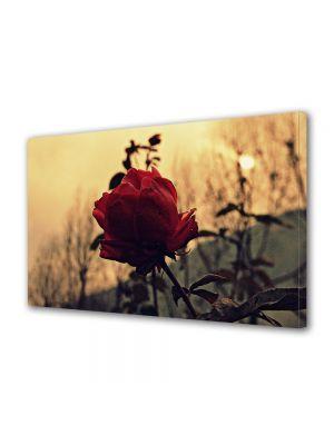 Tablou Canvas Vintage Aspect Retro Trandafir rosu la apus