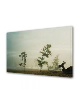 Tablou Canvas Vintage Aspect Retro Copaci dupa furtuna