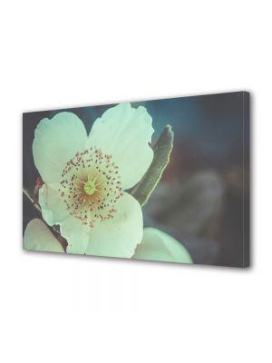 Tablou Canvas Vintage Aspect Retro Detaliu floare alba