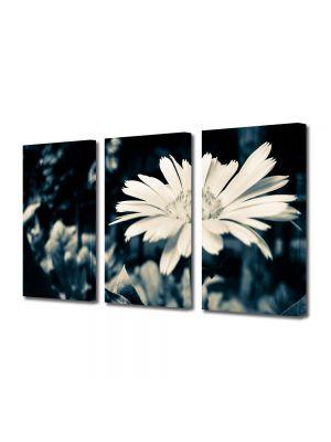 Set Tablouri Muilticanvas 3 Piese Vintage Aspect Retro Floare alba