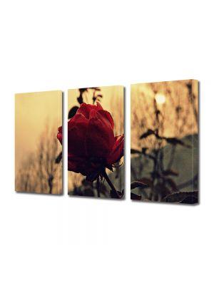 Set Tablouri Muilticanvas 3 Piese Vintage Aspect Retro Trandafir rosu la apus